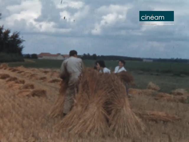 Vie à la ferme au printemps et en été à Vaudoy-en-Brie (77)